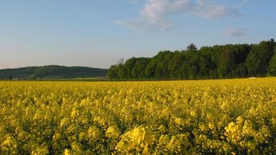 Aargau baut Vorbildfunktion im Bienenschutz weiter aus